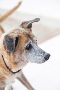 DOG doggies (148 of 233)