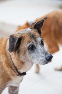 DOG doggies (149 of 233)