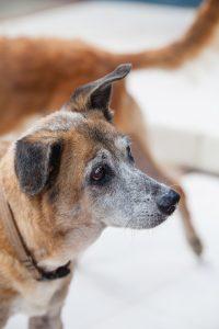 DOG doggies (150 of 233)
