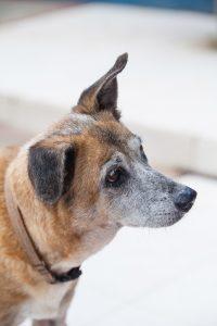 DOG doggies (151 of 233)