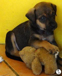 Boukje pups 5 weken klein (10)
