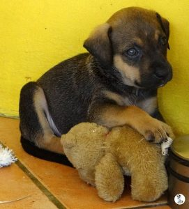 Boukje pups 5 weken klein (11)