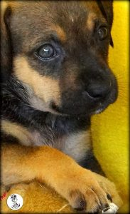 Boukje pups 5 weken klein (21)