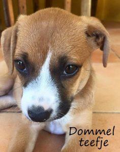 Dommel1