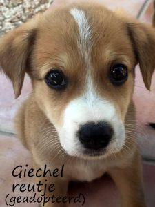 Giechel1