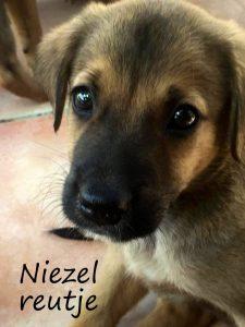 Niezel