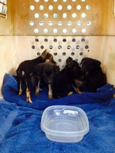 st cruz pups in doos 4