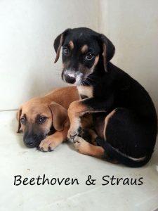 Beethoveb en Straus