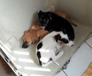 alex pups1