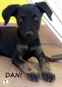Dani1