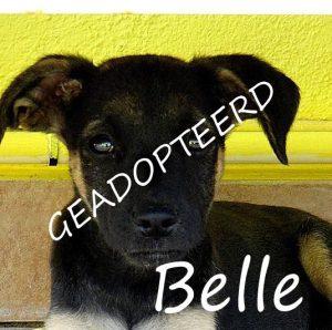Belle geadopteerd