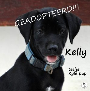AA-Kelly3 -geadopteerd