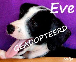 Eve adoptie - geadopteerd