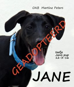 JANE geadopteerd